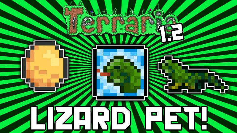 Lizard Pet